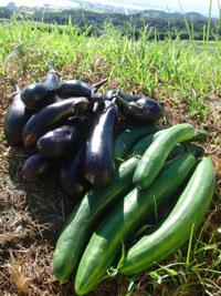 マイファーム大津での農業体験 口コミ