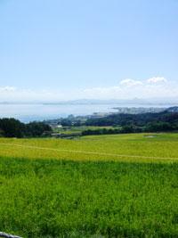 レンタル農園マイファーム(大津) 体験談
