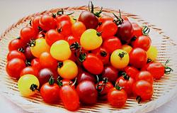 プチトマトの育て方