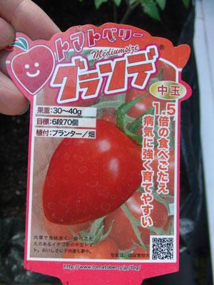トマトベリー栽培