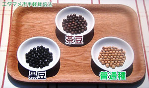 NHK 野菜の時間 枝豆栽培方法