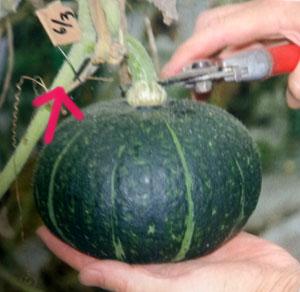 家庭菜園 よくある失敗と対策
