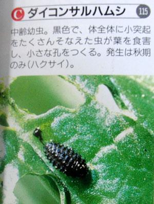 白菜・小カブ・水菜の害虫