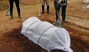 ソラマメの栽培方法・やさいの時間