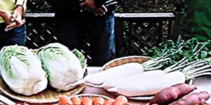 大根と白菜の冬の越し方・保存方法