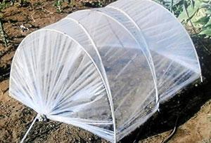 1月に種を撒く にんじんの育て方のポイント