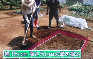 初心者向け サツマイモの栽培方法とポイント