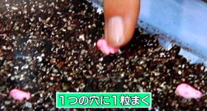 卵パックで苗を育てる方法