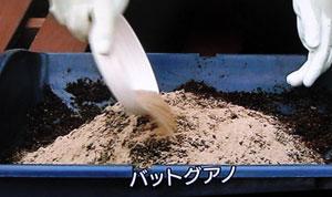 プランター栽培 つるなしインゲンの育て方