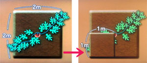 小玉スイカを小さなスペースで育てる方法