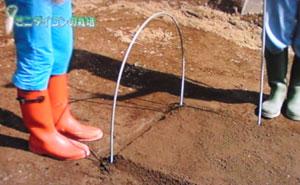 ミニ大根の栽培・育て方