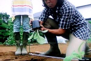種から白菜の育て方