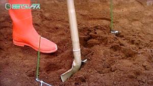 球レタスの栽培・育てるポイント