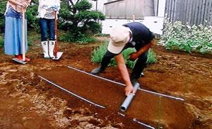 失敗しないカリフラワーの育て方・栽培法