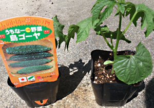 プランター菜園2013年春植え菜園