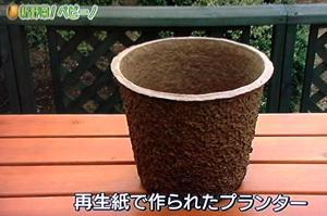 NHKやさいの時間『ペピーノの育て方』